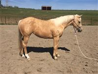 2  year old Mare