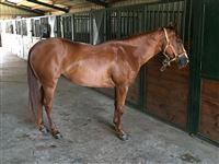 3  year old Mare