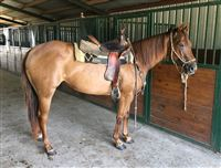 4  year old Mare