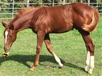 Picture - Weanling Year