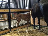 Picture - 12 hours old