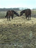 Other horse is her yearling colt