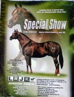 Special Showflyer, decased