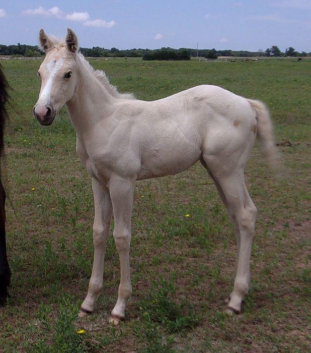 Oklahoma Wildfire Barrel Horse World
