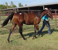 Yearling by Famous Pie