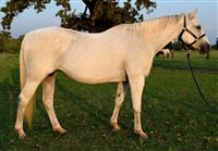 Select Year year oldMare