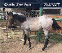 Streakin Boon Olena by A Streak of Fame