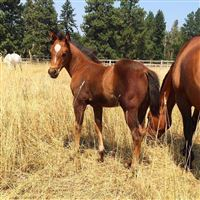 Barrel Horses for Sale - Barrel Horse World