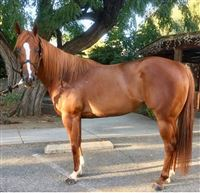 Barrel Horses for Sale - Barrel Horse World