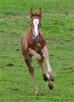 2019 foal