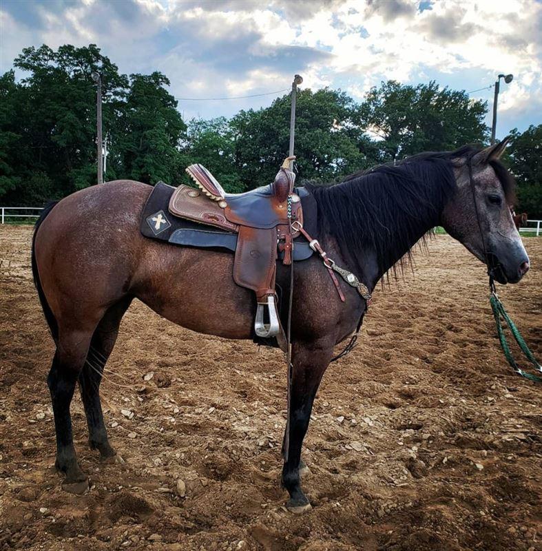Blt Gay Bar Girl Barrel Horse World