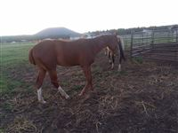 Running with a mare