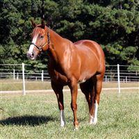 Barrel Racing At Barrel Horse World Barrel Horses For Sale Barrel