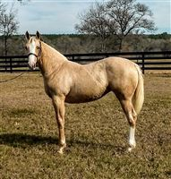 Weanling  year old Mare